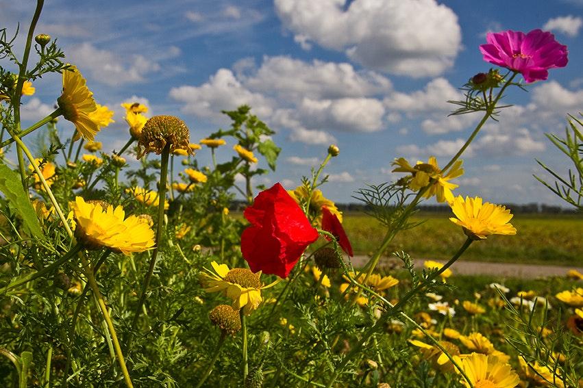 Kruidenrijk grasland en akkerranden