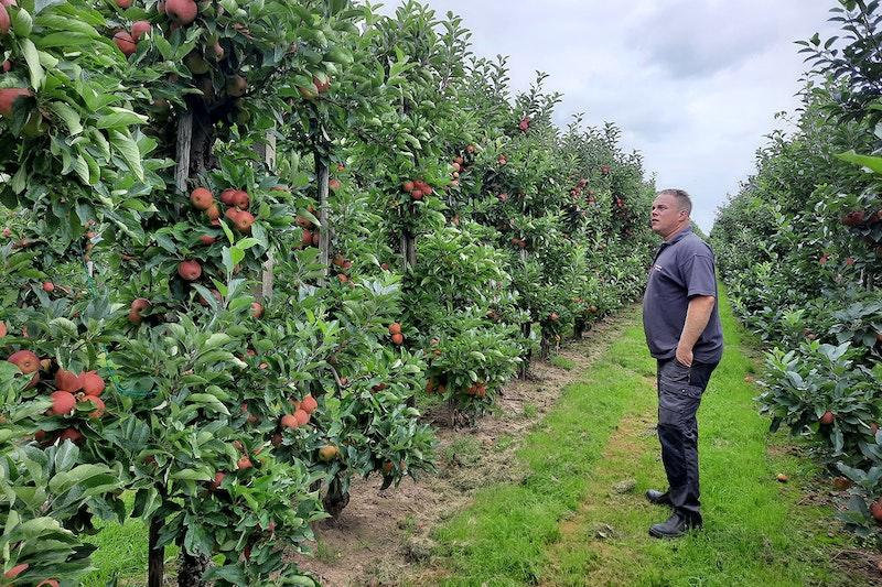 Fruitteler Sander Verstegen